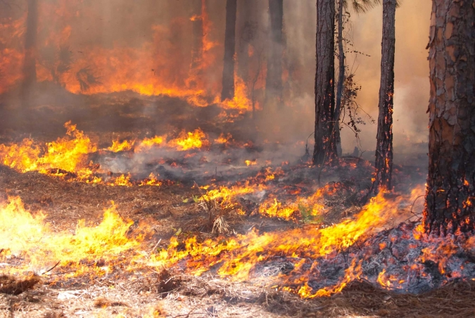 Requirements for Building in Bushfire Prone Areas